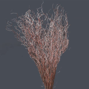 Dried Curly Willow